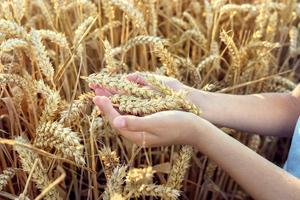 wheat free diet wheat free foods