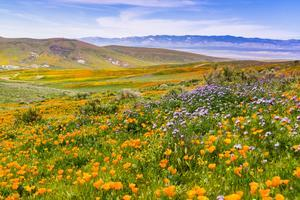 field of flowers - pollen food syndrome pfs food fact sheet